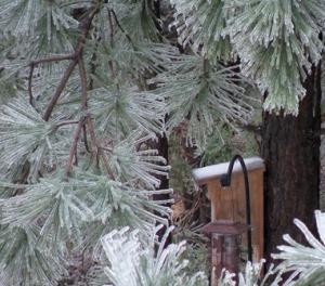 birdhouse in ice storm_13.Dec